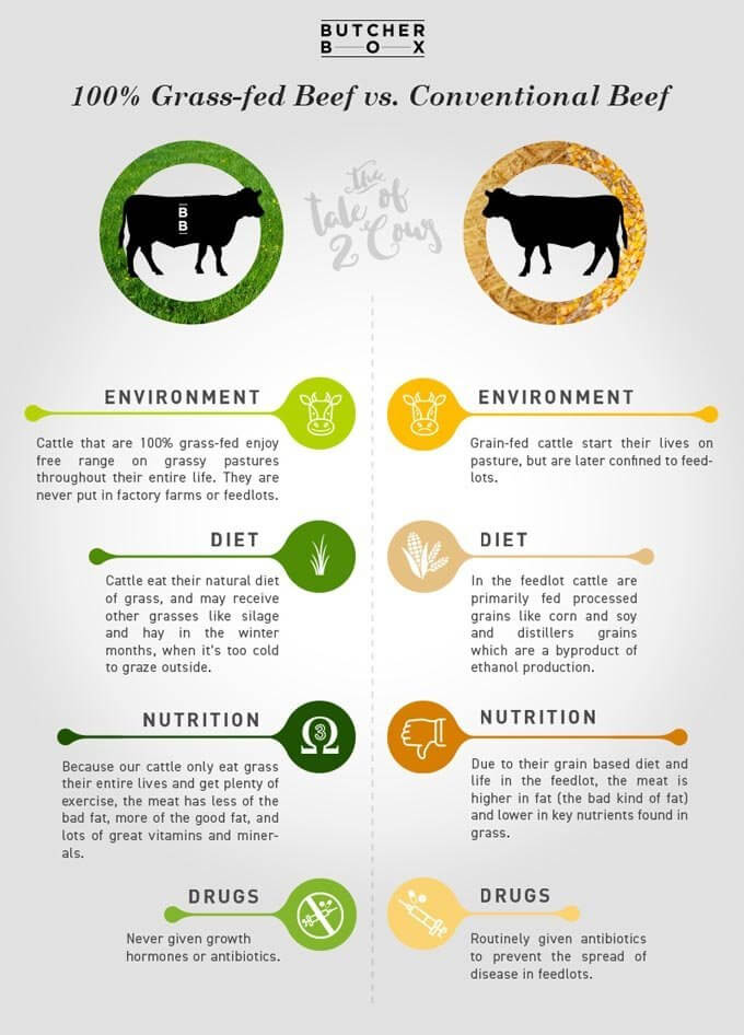 Grass fed beef vs conventional beef